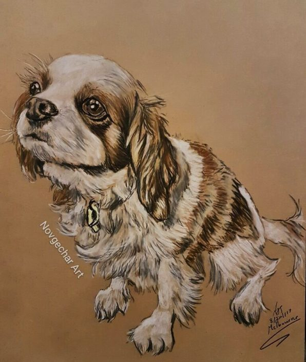 Portrait Drawing Melbourne Dog sketch