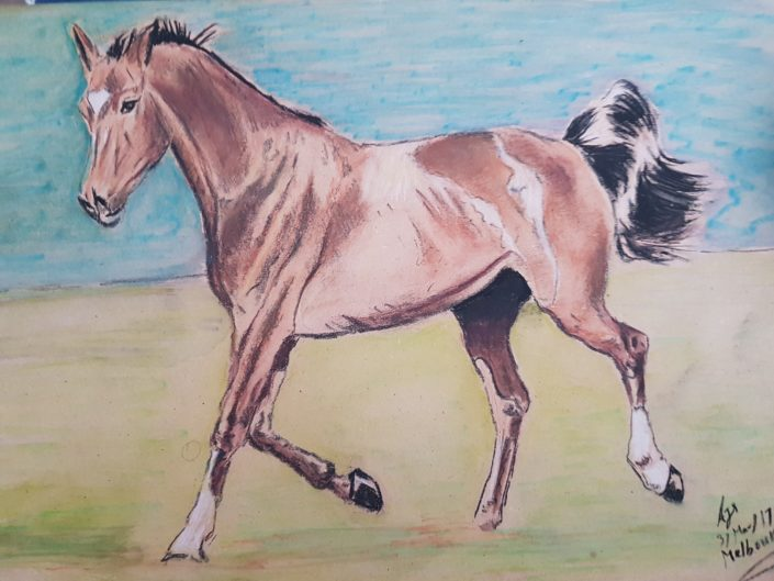 Horse Portrait drawing Melbourne with Pastel