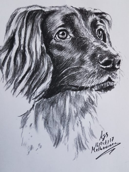 Pet Portrait Drawing Melbourne Dog Sketch