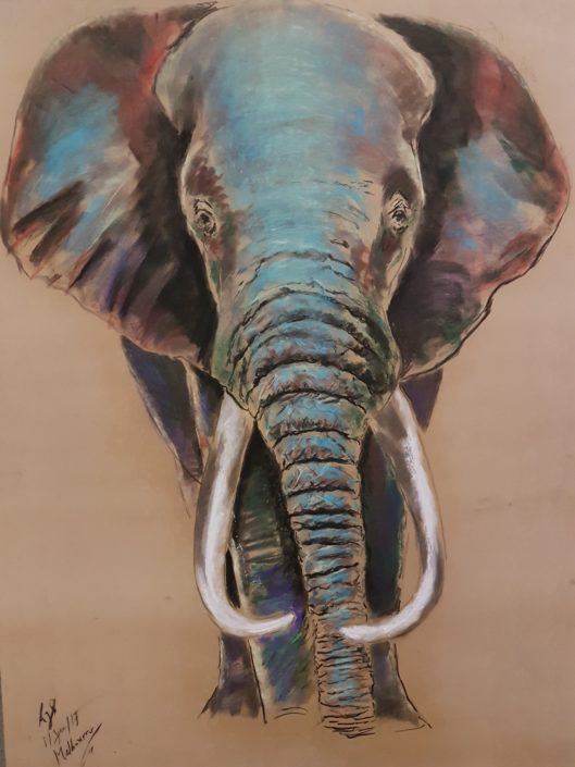 Elephant Melbourne Portrait drawing Pastel