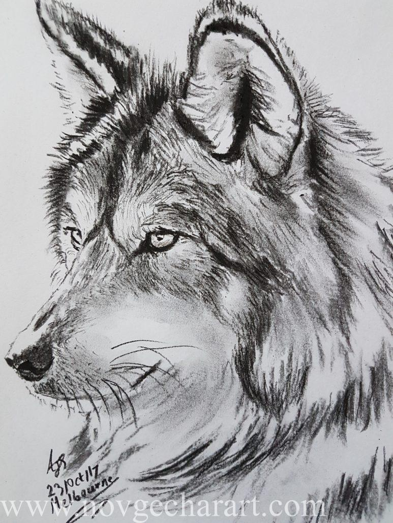 Wolf Drawing Melbourne Charcoal